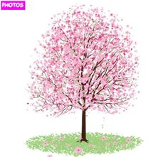 how to draw a detailed cherry blossom