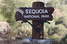 Sequoia National Park...This place absolutely fascinated me in every sense of the word. The redwoods are just unbelievable!! ♥