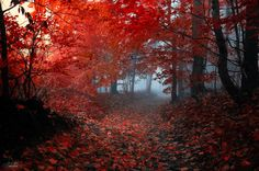 Enchanting Autumn Forests Photography