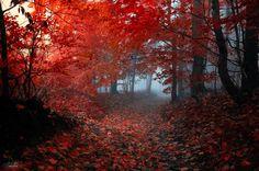Ici maintenant! — landscape-photo-graphy:   Enchanting Forests...
