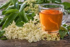 These Wild Medicinal Plants are very common and easy to find. They are also very safe and effective as herbal medicine. Tea Benefits, Health Benefits, Elderflower, Medicinal Plants, Herbal Medicine, Herbal Remedies, Herbalism, Alcoholic Drinks, Healing