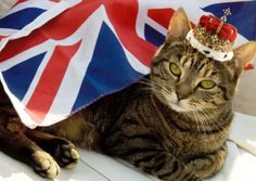 Victoria will be VERY amused to find a home, RSPCA try a Royal idea to rehaome pets.