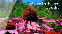"""""""Botanische Tuinen Utrecht"""" ** Utrecht ** Utrecht ** http://www.uu.nl/nl/botanischetuinen/Pages/default.aspx ** Fort Hoofddijk is de botanische tuin (hortus botanicus of plantentuin) van de Universiteit Utrecht (UU). De botanische tuin Fort Hoofddijk herbergt de levende plantencollectie van de universiteit."""