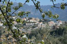 A glimpse of Ravello through the spring blossoms.