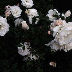 Bouquet of flowers. Jungkook Fanart, Midnight Garden, Beautiful Flowers, Dark Flowers, Planting Flowers, Floral Wreath, Instagram, Photography, Aesthetics