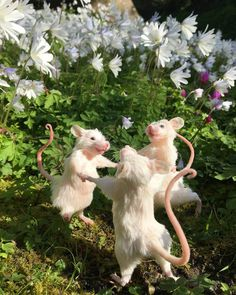 Cute Little Animals, Cute Funny Animals, Rats Mignon, Cute Rats, Nature Aesthetic, Aesthetic Grunge, Tier Fotos, Animal Memes, Cute Babies