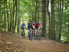 Beliebte Strecke für Mountainbiker: Dörenberg im Teutoburger Wald