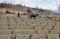 La Revolución Enológica en Rioja Alavesa
