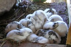 Rabbit Reproduction: How to Breed Rabbits