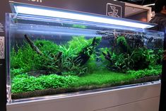 Interzoo 2010 Planted Tanks | Flickr - Photo Sharing!