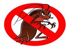 The Ultimate To Get Rid Of Roaches Forever.   #Roach_killer #Pest_Control_Roaches #Pest_Control #Roaches_Remedies #Roaches_Killer #Get_rid_of_roaches #How_To_Get_Rid_Of_Roaches #How_Do_I_Kill_Roaches #Killing_Roaches,