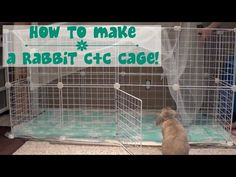 How to Build a Bunny Cage (Cheap, Easy and Safe) Part 2. & Cossie's Room Tour! | Video - YouTube