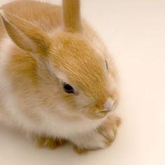 #rodent #rabbit #cute #zolux