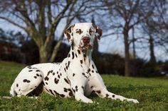 Basset Hound, Basset Artesien Normand, Griffon Nivernais, Grand Basset Griffon Vendeen, Doggies, Dogs And Puppies, Animals Beautiful, Cute Animals, Spotty Dog