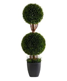 Look what I found on #zulily! 36'' Potted Tea Leaf Double Ball Topiary #zulilyfinds