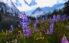http://www.skyrim-beautification-project.com Skyrim Beautification Project…