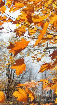 ✯ Autumn Ritual