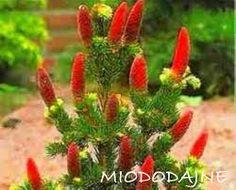 Znalezione obrazy dla zapytania rośliny zimozielone do ogrodu