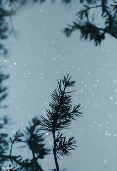 App Background, Forest Background, Textured Background, Space Backgrounds, Aesthetic Backgrounds, Aesthetic Wallpapers, Pine Branch, Branches, Branch Drawing