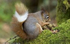 Punky squirrel -love the tail stripe!