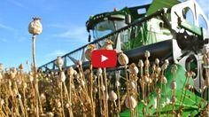 Poppy Seed - Seeding to Harvest Wind Turbine, Wind Chimes, Modern Agriculture, Poppy, Farmer, Harvest, Seeds, Fair Grounds, World