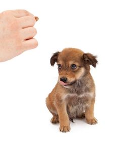 How To Stop A Puppy From Biting Why You Must Do So Asap Video Adopting A Dog Or Puppy