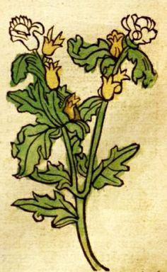 Gart der Gesundheit, Augspurg, Hamsen Schoensperger, 1487: [H]osquiamus