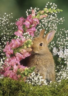 ☆Bunny in Spring Flowers Cute Baby Bunnies, Cute Baby Animals, Animals And Pets, Funny Animals, Cute Babies, Beautiful Creatures, Animals Beautiful, Cute Bunny Pictures, Fluffy Bunny