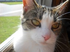 My (julia), kitty. She is known as Queen B.  She was Bella but twilight came out and that dreadful  girl stole the name. :D