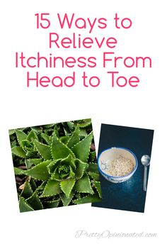 Itchy from bug bites, poison ivy and other summer woes? Check out 15 ways to relieve it from head to toe! Poison Ivy Remedies, Heat Rash, Itch Relief, Cold Shower, Itchy Scalp, Band Aid, Happy Summer, Natural Home Remedies, Tea Tree Oil