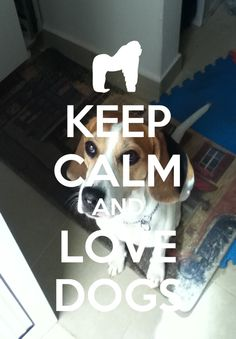 Keep calm and love dogs. Kudos to the photographer! Thank you!