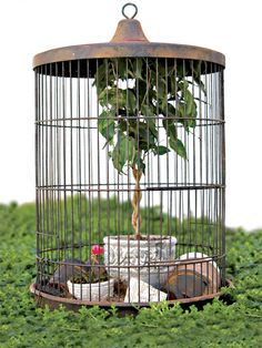 Transform an old birdcage into a garden ornament and place it in the garden or at your front door