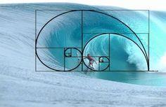 Fibonacci number ~ Fibonacci ~ sacred geometry & the flower of life ~ The Sacred of Geometry ~ Sacred Geometry and Ancient Knowledge . Geometry Art, Sacred Geometry, Geometry Architecture, Geometry Tattoo, Architecture Tattoo, Architecture Design, Fibonacci Sequence In Nature, Spirals In Nature, Fractals In Nature