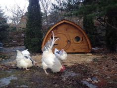 Lightfoot Hobbit Hole Chicken Coop with Attached by HobbitHoles