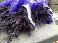 Fresh picked lavender, Lavender by the Bay, East Marion, NY. Photo by Mary Hunt