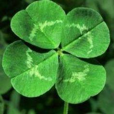 Imagen de green, nature, and clover