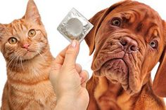 How cute are they? #condom #wrapitup #cat #dog #puppies