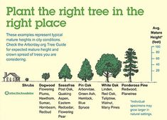 Plant shade trees for summer energy savings   Living with Energy In Iowa
