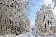 Road near Virovitica lakes in winter.  Work of Boris Kozjak