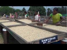 The Araku Way of Life is a visual account of Naandi Foundation's Araku Fair-trade Organic Coffee Project.