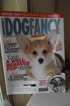 Dog Fancy Magazine April 2014 Pembroke Welsh Corgi Training Mistakes Puppy Issue