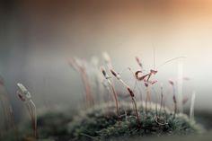 Photo Kungfu Mantis by Heri Wijaya on 500px