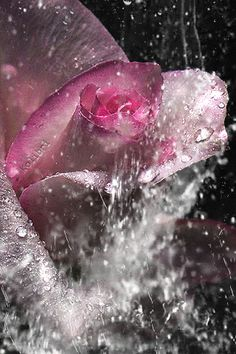 The perfect Beautiful Flowers PinkRose Animated GIF for your conversation. Discover and Share the best GIFs on Tenor.