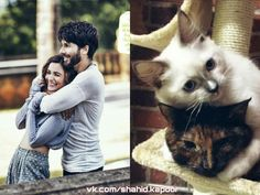 Shahid Kapoor & Alia Bhatt | association Shahid Kapoor, Alia Bhatt, Bollywood, Cats, Animals, Gatos, Animales, Animaux, Animal