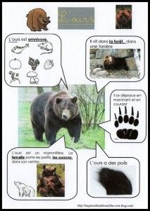 Une fiche documentaire bien synthétique sur l'ours !