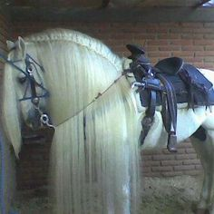 Why can't I get my horses mane to look like that!!!