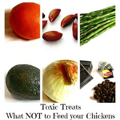 Toxic Treats | What Not to Feed Your Chickens #homesteading #urbanchickens