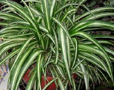 Here are the best 20 indoor office plants that improve productivity and reduce stress in your environment. Read our list of indoor plants to choose from. Indoor Office Plants, Water Plants Indoor, Best Bathroom Plants, Bedroom Plants, Cool Plants, Green Plants, Diy Plants, Plantas Indoor, House Plants Decor