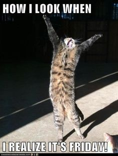 Amazing Creatures: 30 Funny Animal Captions - Part 8 Pics . Amazing Creatures: 30 Funny animal captions - part 8 pics - Animals and pets Funny Animal Quotes, Animal Jokes, Cute Funny Animals, Cute Cats, Funny Quotes, Funniest Animals, Cat Fun, Cat Quotes, Adorable Kittens