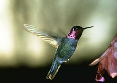 How to Attract Hummingbirds!